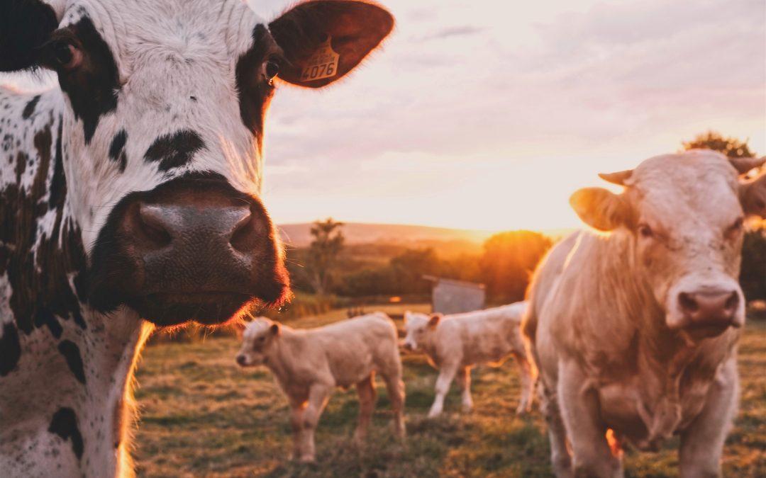 Zbavte sa závislosti na mliečnych výrobkoch-ako a prečo?